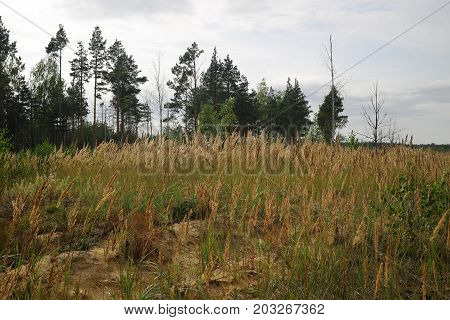 Forest with dry trees grass and marshland.
