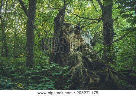 Fallen trees covered in moss. forest, green, moss, wilderness,