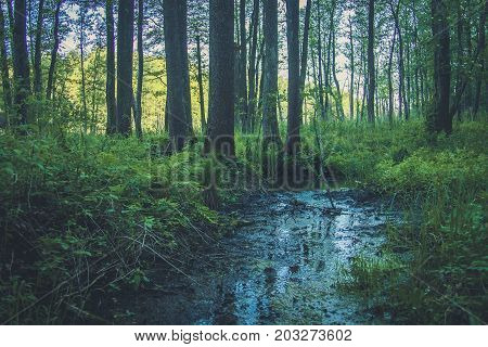 Source Hidden In The Forest