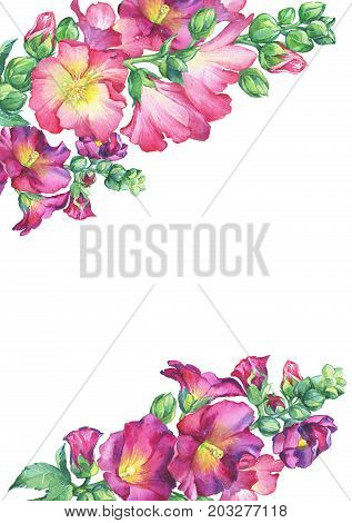 Border of Mallow pink flower (Alcea rosea, malva, hollyhock, Althaea rugosa). Watercolor hand drawn painting floral illustration isolated on white background.