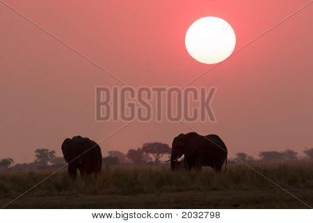 Elephants During Sunset
