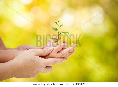 Mother and baby holding a young green plant together / Love and protect nature concept