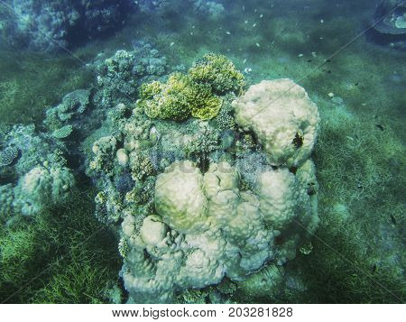 Tropical seashore underwater landscape. Coral reef round shape. Coral reef underwater photo. Snorkeling or diving undersea banner template. Seaside summer vacation activity. Marine aquarium background