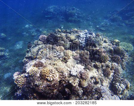 Tropical seashore underwater landscape. Coral reef in blue sea water. Coral reef underwater photo. Snorkeling or diving undersea banner template. Seaside summer vacation activity. Aquarium background