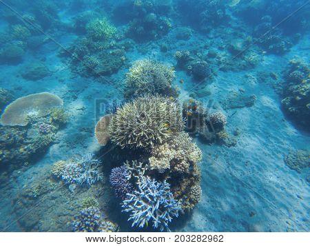 Tropical seashore underwater landscape. Coral reef in blue water panorama. Coral reef underwater photo. Sea snorkeling or diving. Undersea banner. Seaside sport activity. Marine aquarium background