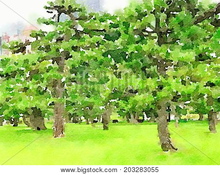 Digital watercolor painting of Japanese Black Pine Trees on a field of grass with space for text.