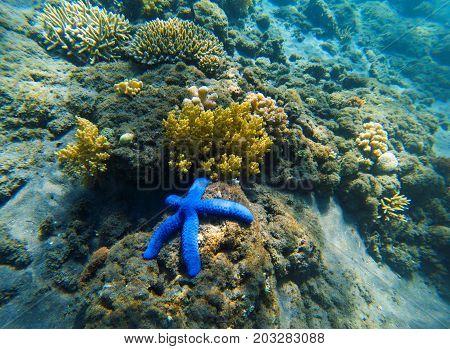 Tropical seashore underwater landscape. Coral reef and blue starfish. Starfish on sea shore underwater photo. Snorkeling or diving undersea banner template. Seaside fauna. Marine aquarium background