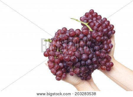 Hands holding purple seedless grapes isolated on white