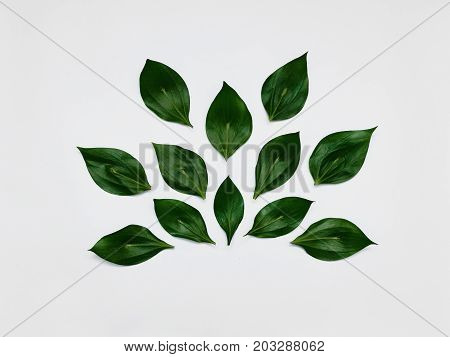 Minimalist plant background Bright green leaves are lying in abstract shape on a white background Flat lay Modern minimalistic photo template