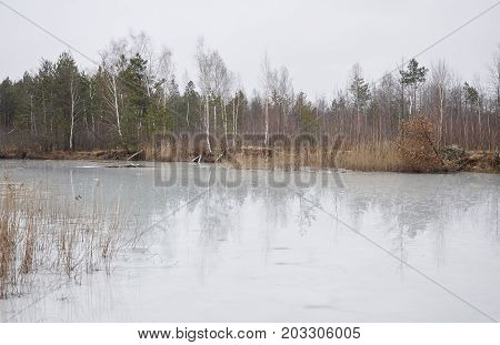 Trees Reflected In The Melting Lake