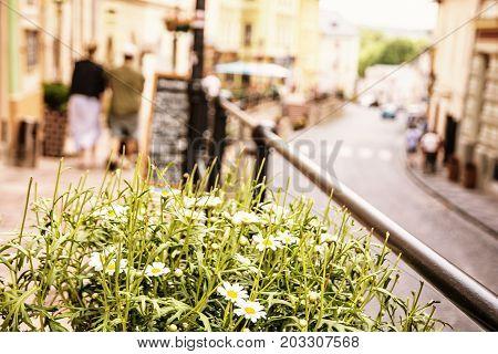 Flowerpot with daisies in main street in old mining town Banska Stiavnica Slovak republic Unesco. Travel destination. Urban scene. Yellow photo filter.