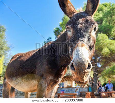Old donkey portrait on sunny summer day