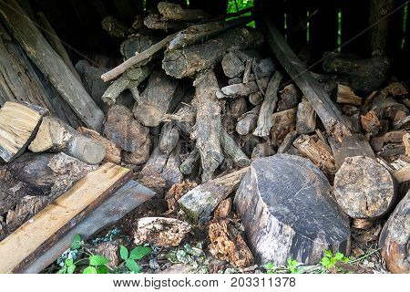 Old stump and firewood . Preparation of firewood for the winter