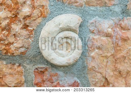 Ammonite fossil embedded in stone spiral snail real ancient petrified shell isolated on white