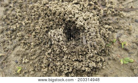 Ant Hill. A Nest Of Ants In The Earth, A Small Group Of Slices Of Clay