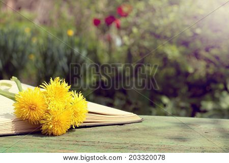 open book with a bookmark from a bouquet of flowers on a bench on a sunny day/ reading in the open air