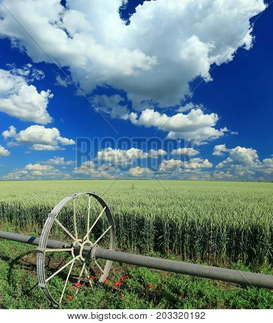 field of wheat and irrigation equipment