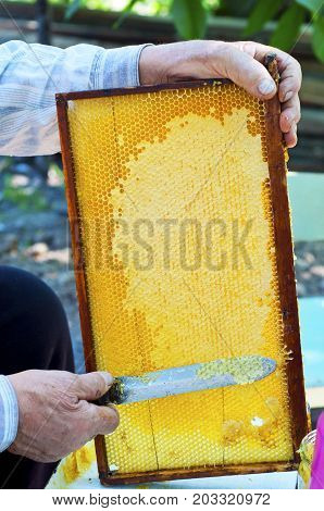 Close up of human hand extracting honey from yellow honeycomb. Beekeeper cuts wax off from honeycomb frame with special knife.