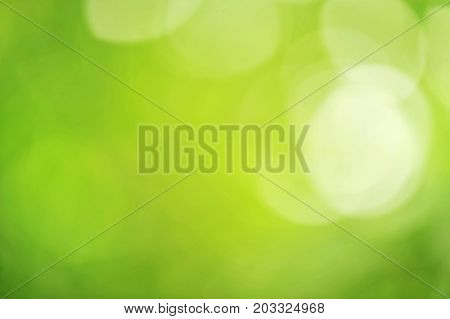 Nature green bokeh background green bokeh,green bokeh abstract