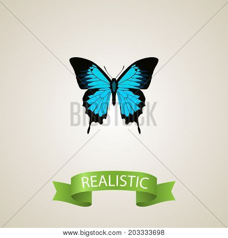 Realistic Sky Animal Element. Vector Illustration Of Realistic Papilio Ulysses Isolated On Clean Background