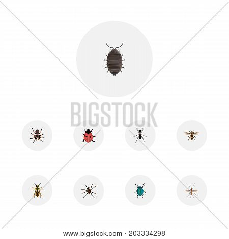 Realistic Bee, Dor, Wasp And Other Vector Elements