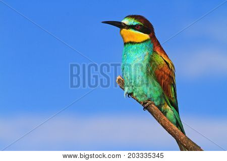 wild bird with colored feathers , unique world, untouched nature