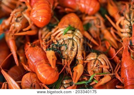 Many crayfishes prepared with deal according traditions of Russian cuisine