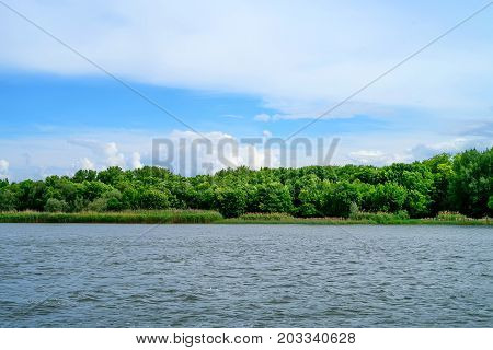 Trees on bank of smal river in summer peaceful backgorund
