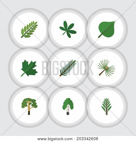 Flat Icon Natural Set Of Hickory, Timber, Spruce Leaves And Other Vector Objects