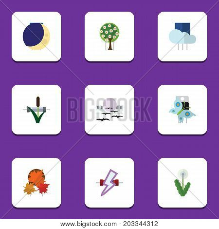 Flat Icon Nature Set Of Overcast, Floral, Cattail And Other Vector Objects
