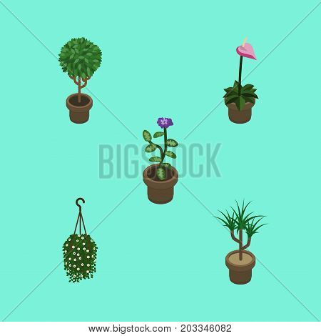 Isometric Houseplant Set Of Houseplant, Flower, Grower And Other Vector Objects