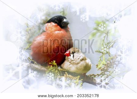 Winter song bullfinch birds and finches on a branch with snowflakes.