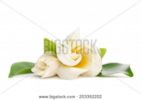 beautifull white flower isolated on white background
