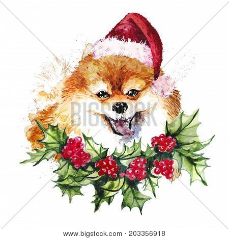 Watercolor artistic orange pomeranian dog in santa hat and holly wreath portrait isolated on white background. Cute pet head hand drawn. Pomeranian puppy. New Year symbol christmas card xmas emblem.
