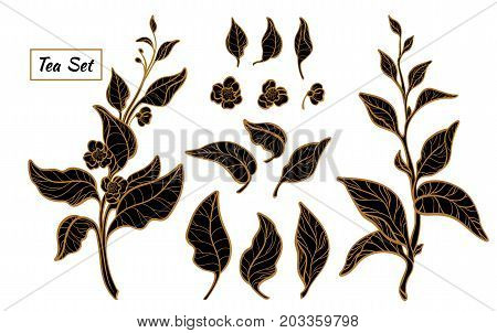 Set of tea bush branches with leaves and flowers on white background. Realistic. Organic product. Vector black silhouette isolated on white background and grouped for easy editing eps.10