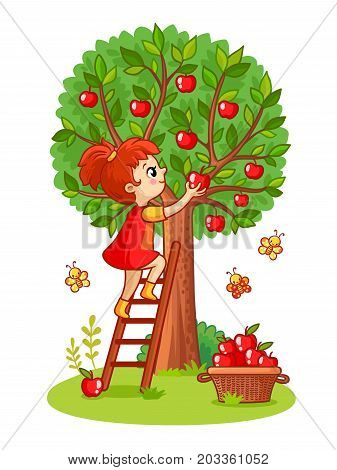 Girl on the stairs collects apples. Vector illustration with girl and apple tree on a white background.