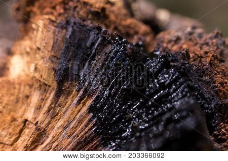 black resin sectional trunk in tree macro