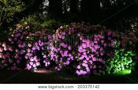 Flowers with light. Night surroundings and adjoining territories of hotel Yalta Intourist.