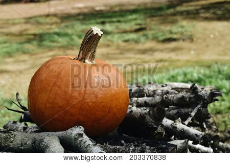 closeup of a nice pumpkin on a pile of firewood in the garden or back yard