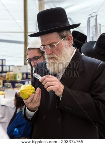 JERUSALEM, ISRAEL - OKTOBER 16, 2016: Elderly ortodox Jew with white beard is checking with lupa ritual plant citrus - etrog. Traditional market before the holiday of Sukkot