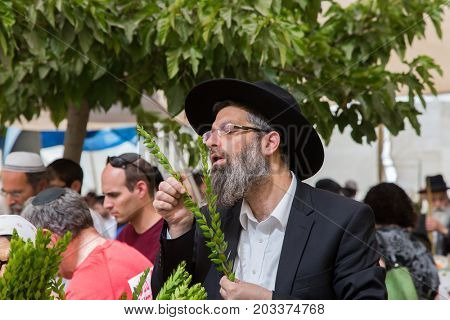 JERUSALEM, ISRAEL - OKTOBER 16, 2016: Traditional market before the holiday of Sukkot. Religious Jew with gray beard in a black hat chooses ritual plant myrtle