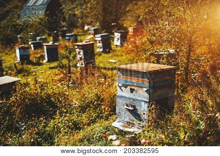 Close-up view of wooden bee-hive unit standing on autumn grassland of Altai mountains with wildflowers and native grasses around multiple hives in defocused background Chemal district Russia