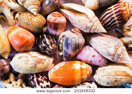 Multicolored sea shells background. Small shells closeup. Sea shell banner template. Tropical island seashore finding. Exotic island beach texture. Warm sea nature detail. Marine shell cover top view.