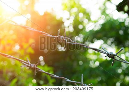 Barbed wire in sunny day. Sunny nature behind barbwire. Protective fence around tropical garden. Summer trees and orange sun flare behind dangerous border. Freedom concept. Barbed wire protection