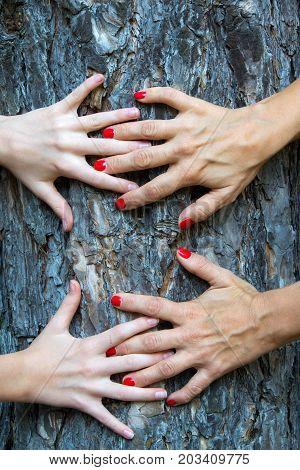 Hands hug a tree with love. Tree huging close up