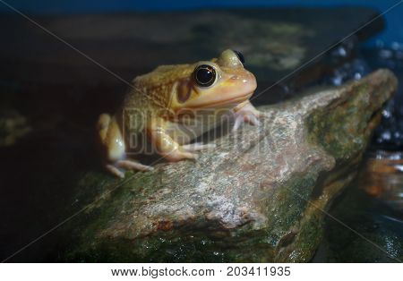 frog on a stone rock yellow amphibian nature pond swamp