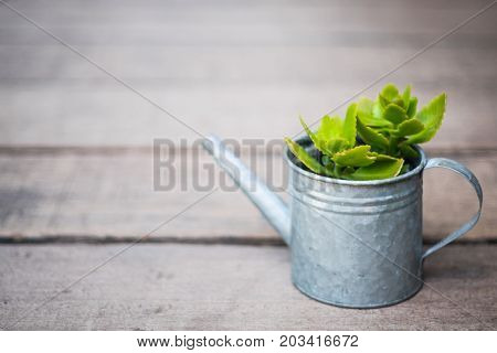 A green little plant in zinc watering can on wooden floor with vignette effect selective focus.