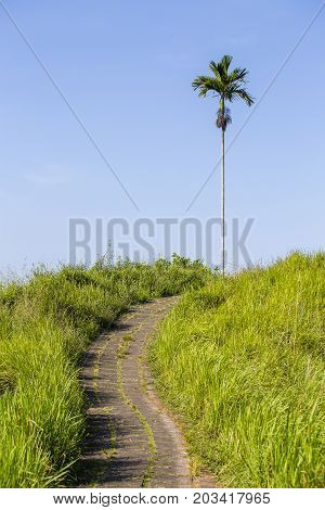 Palm tree and road at the top of the hill in the green grass during sunrise in Ubud island Bali Indonesia