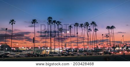 TAMPA, FLORIDA - MARCH 8, 2016 - A display of palm trees during sunset on March 8, 2016, in Tampa, Florida.