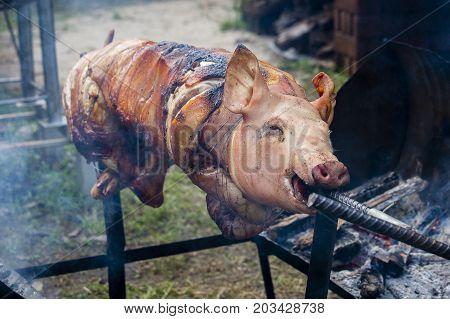 Roasting piglet grilled pig at street food market in Koh Phangan Thailand. Close up